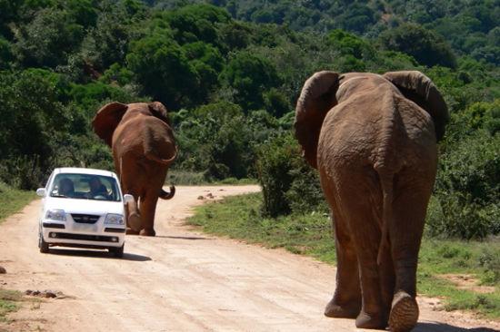 大象在路上