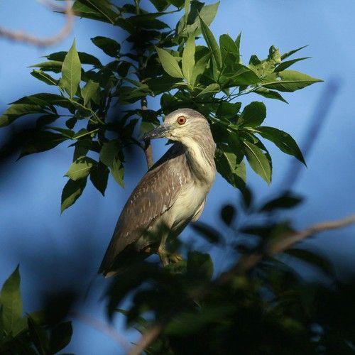 行摄候鸟求偶的春天 推荐4个拍鸟好去处(组图)