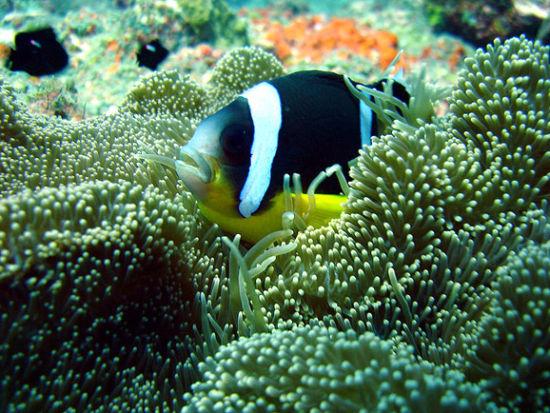 海洋生物和珊瑚