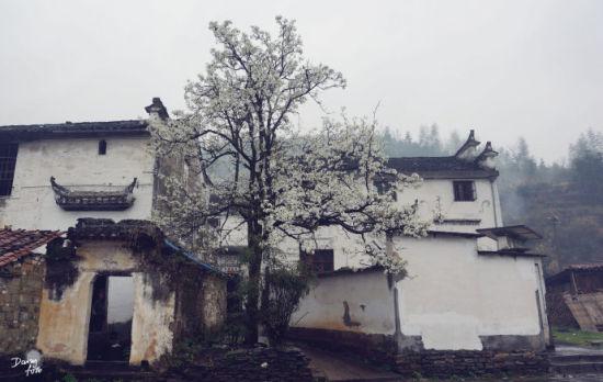 古朴典雅的黑白建筑依山傍水,掩映在田垅和碧野,小桥、流水、人家中,散发着一种别样的韵味