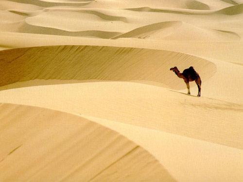 撒哈拉大沙漠旅行