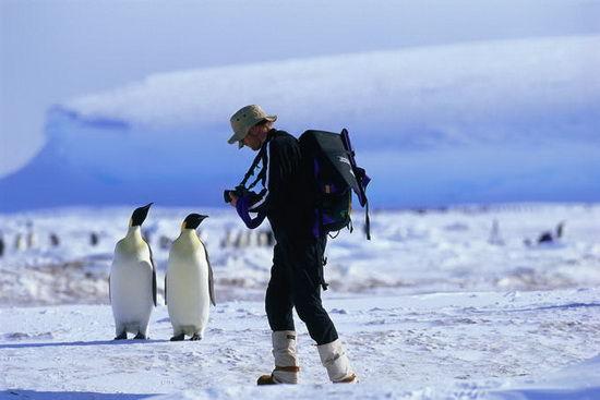游客正在拍摄企鹅