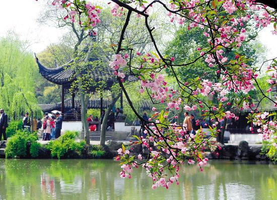 海棠花盛开的苏州拙政园