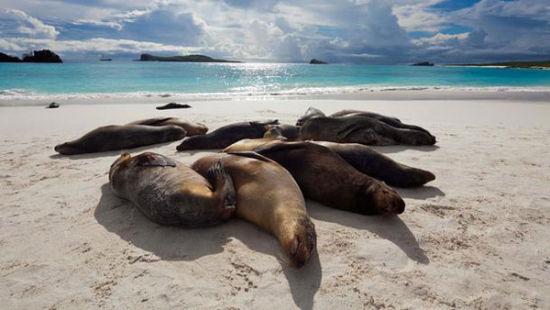 海狮沐浴在阳光下的画面是海岸沙滩上常见的美景
