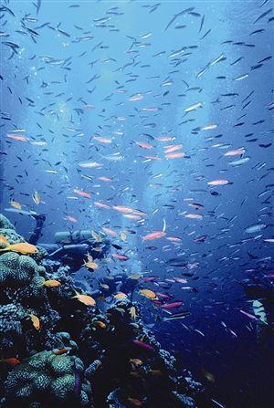 奇幻的海底