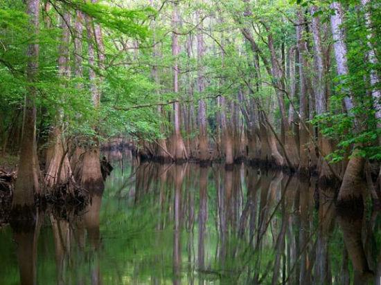 坎格瑞沼泽国家公园
