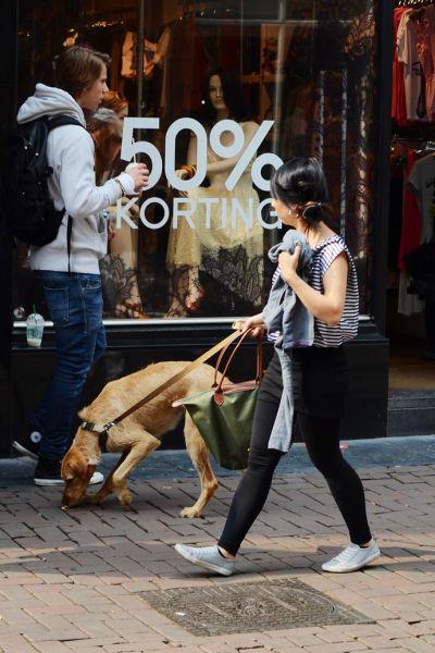 组图:在动物天堂欧洲遛狗也是另一种时尚