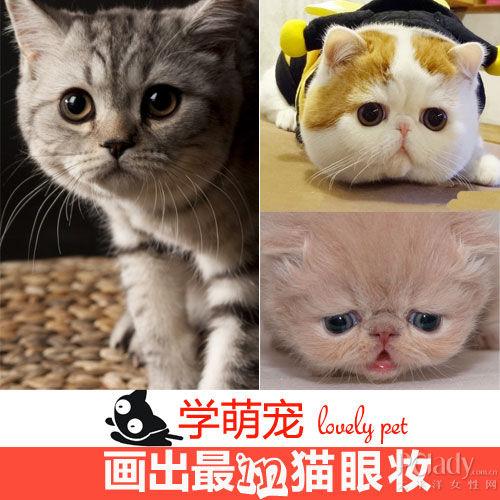 组图:向最萌喵星人麻豆学习4款最潮猫眼妆
