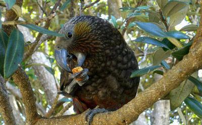 卡皮蒂岛自然保护区