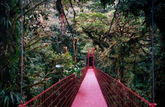 蒙特沃德云雾森林保护区,哥斯达黎加