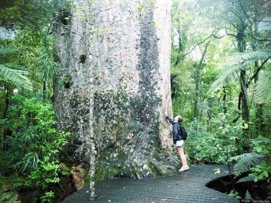 怀波瓦森林,新西兰