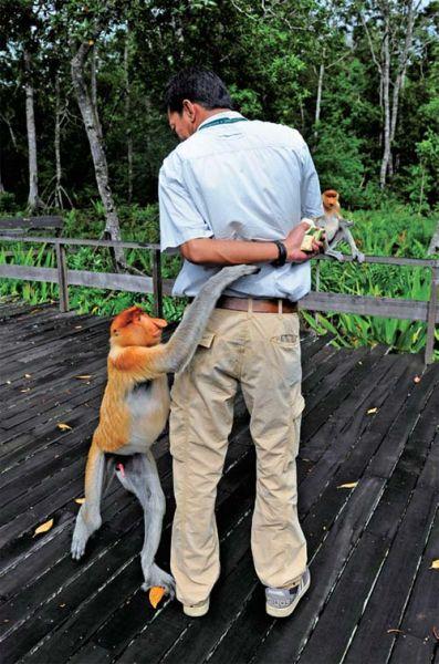 拉卜湾长鼻猴保护中心