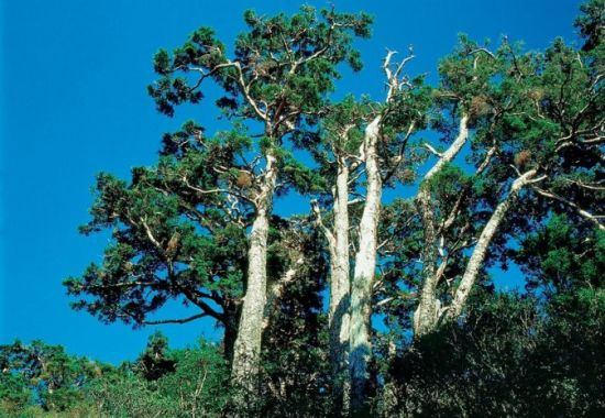 半山腰的树木造型很特别