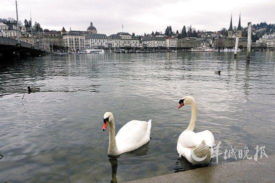 卢塞恩(Luzern)城市风光一流,吸引众多国内游客