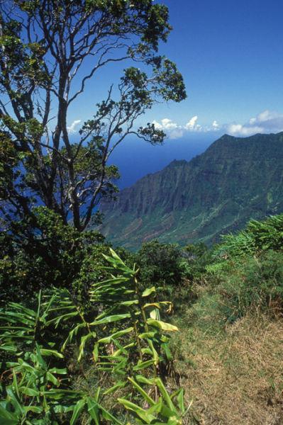 夏威夷的考艾岛