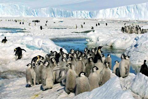 参观南极洲时,一定不要忘了去看看这个地方独有的野生动物,像是企鹅