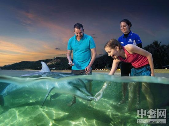 亲密接触野生海豚
