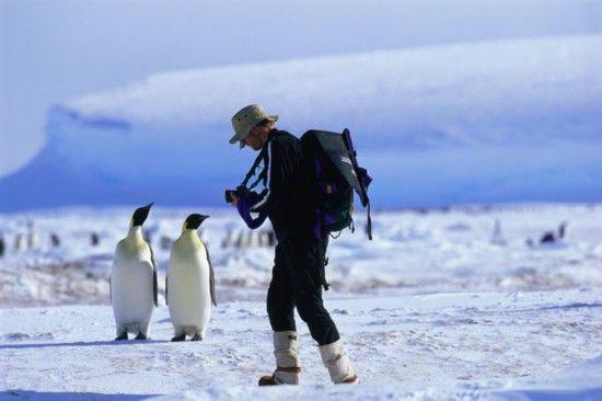 游客和帝企鹅擦身而过
