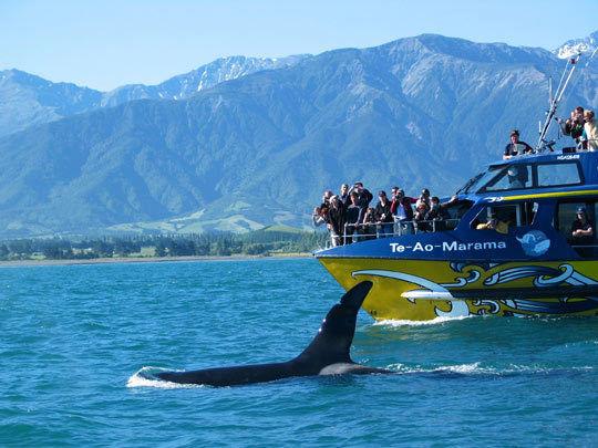 与抹香鲸的浪漫邂逅