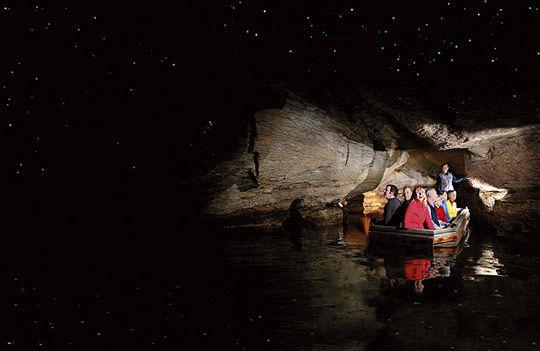 探索神秘的萤火虫世界