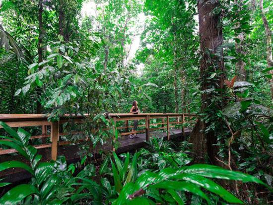 哥斯达黎加热带雨林