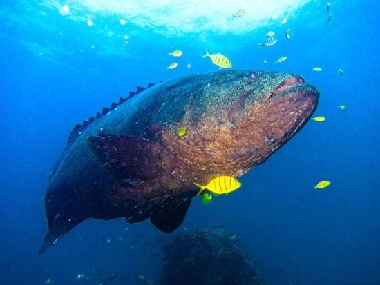 大量惊艳的海洋生物