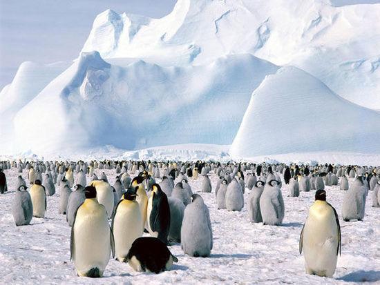 不过考虑到该地区环境的稳定性以及独特野生动植物的保护,建议游客们通过南极洲国际旅游协会预定旅游航程,这样更加有利于保护和维持其环境稳定性。   斯里兰卡   由于斯里兰卡内乱历史的影响,一直以来人们都将其只看做立交桥之国,然而如今这座丛林岛也开始闪耀了。经过4年的稳定期,其成为了一个很受欢迎的旅游目的地,是许多精打细算的游客们尝试东南亚新东西的理想之选。