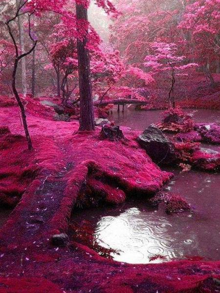 京都Saiho Ji花园(日本)