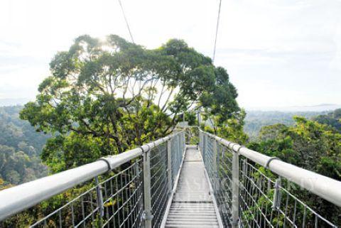 天空漫步是一条穿越雨林的险路