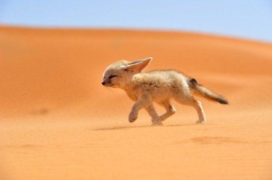 图片拍摄于非洲的摩洛哥。