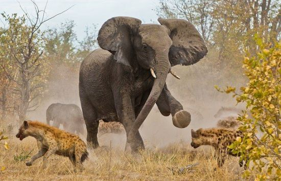 非洲博茨瓦纳的乔贝国家公园