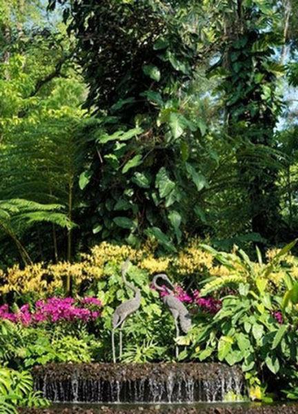新加坡新加坡植物园