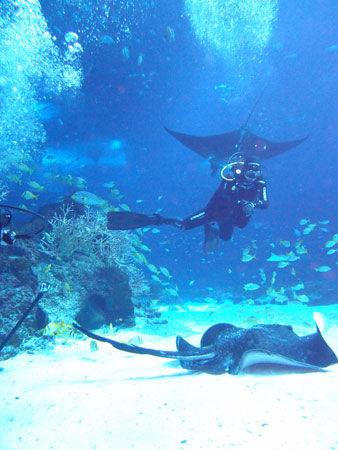 近距离邂逅鲨鱼