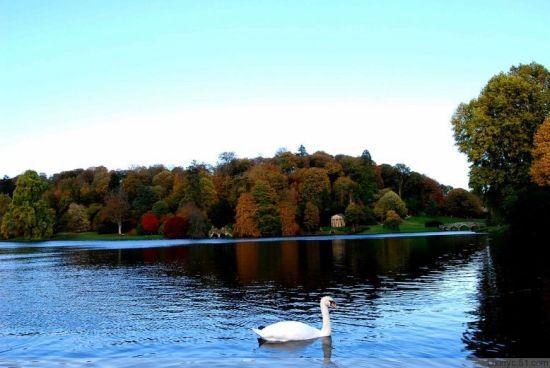 湖面上的白天鹅