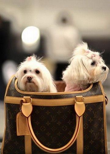 Louis Vuiitton宠物行李箱