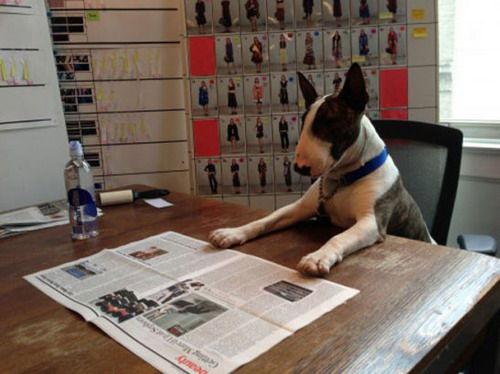 Marc Jacobs爱犬