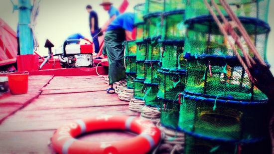 捕捞梭子蟹的笼子