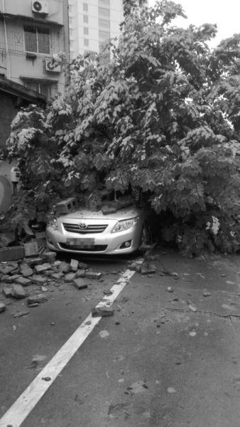 李惠利医院附近一棵大树倒伏砸中汽车。见习记者 刘骥文 摄
