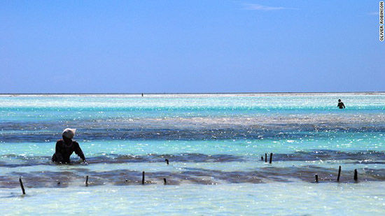 赞比亚东海岸和南海岸上的妇女在海边种植海藻。