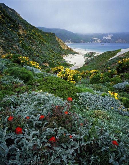 加州 海峡群岛 海峡群岛国家公园