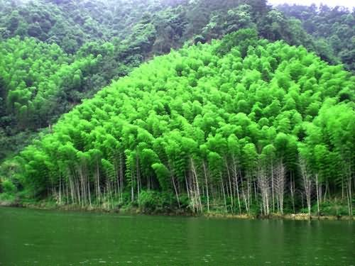绿水和翠竹交相呼应
