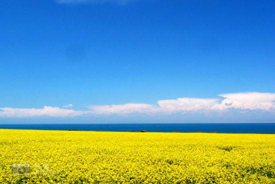 蓝天与金黄色的大地