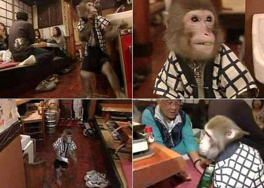 猴子服务生,得到的小费是小豆子