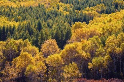 山林秋色和野趣