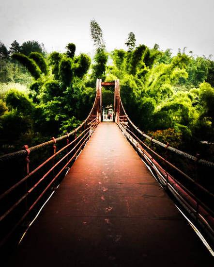 吊桥的那边是竹林