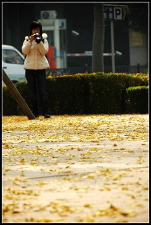 满地的落叶