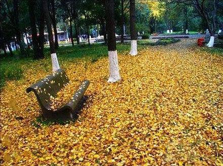奥体公园秋景