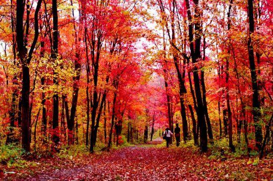 寻觅最火红的秋色最靠谱的赏红叶地推荐(组图)