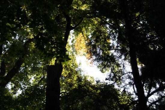 林间一抹秋意