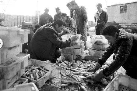 新鲜鱼货到港,码头一派繁忙景象。 CFP供图
